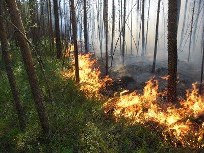 «Тихую охоту» в национальном парке запретили из-за угрозы пожаров