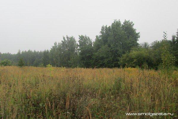 В Смоленской области погода совсем осенняя