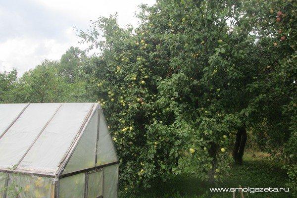 В Смоленскую область приходят слабые морозы