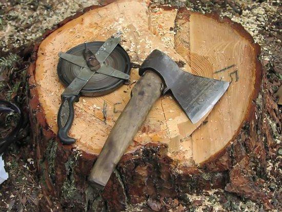 В Шумячском районе повязали «черного лесоруба»