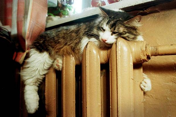 Центр Смоленска больше не замерзает