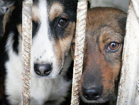 Неравнодушных смолян просят помочь животным