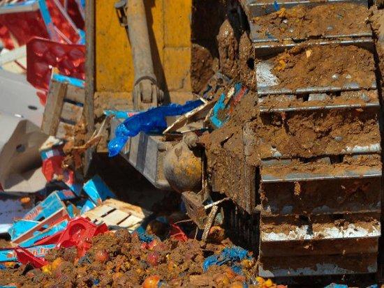 На Кучинском полигоне закопали 50 тонн хурмы и помидоров