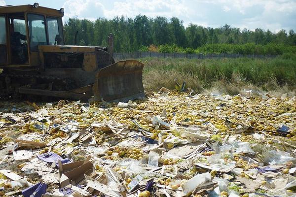 В Смоленской области «похоронили» груши