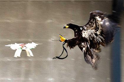 Полиция Лондона собралась обучить птиц перехвату беспилотников