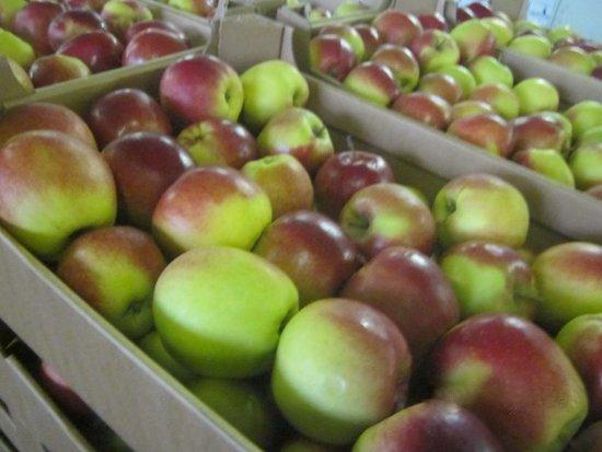 В Смоленскую область пытались ввезти «полиуретановые яблоки»