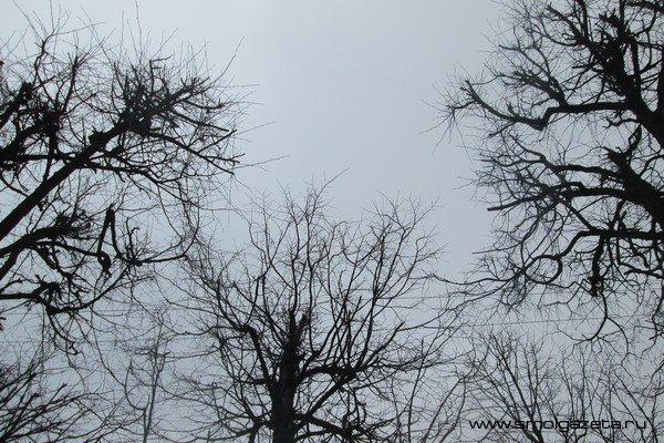 В Смоленскую область с атлантическим циклоном придут дожди