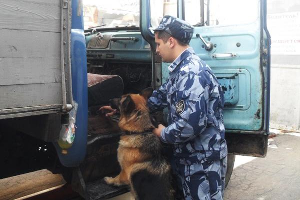 В Смоленской области в колонию пытались через охранные сооружения перебросили марихуану