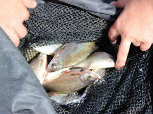 Рыбаков-гастролеров повязали с сетями на Десногорском водохранилище