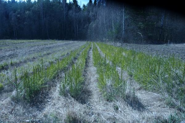 Смоленские лесоводы приступили к посадкам