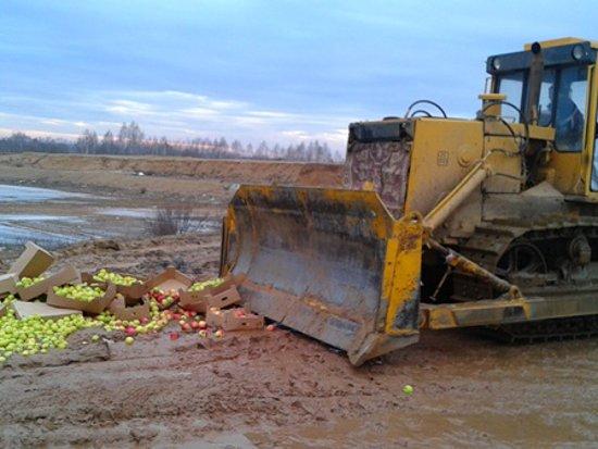 На Смоленщине под бульдозер пустили 40 тонн хурмы и груш
