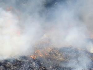 Пять природных пожаров выявили на территории региона из космоса