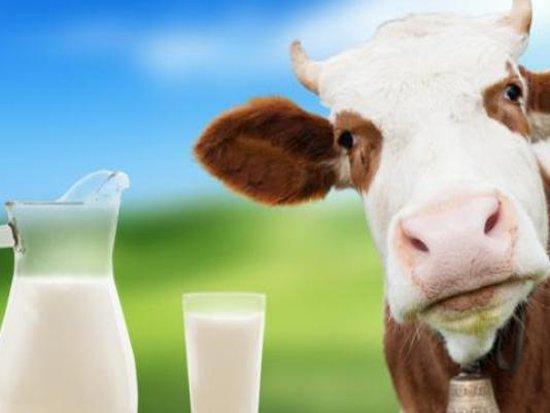 Не следивший за качеством продукции молочный цех наказали на 150 тысяч