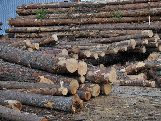 Лесной браконьер срубил деревья в лесу на 350 тысяч рублей