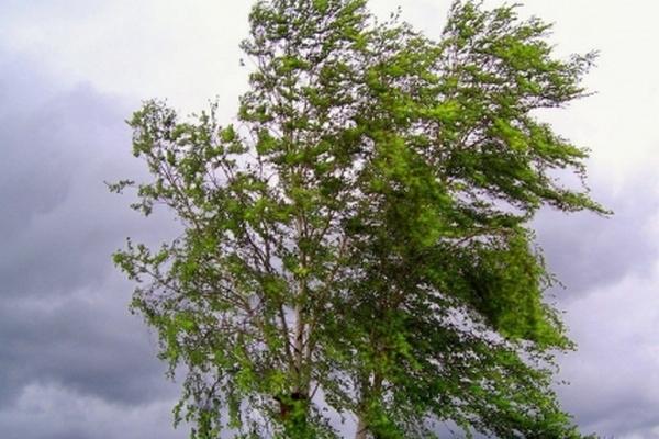 21 июня Смоленскую область захватят ливни и грозы