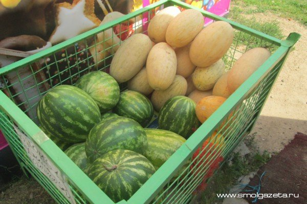 Жителям Смоленска не рекомендуют покупать арбузы в уличных палатках