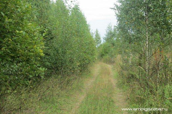В Смоленском районе спасатели вывели из леса двух грибников