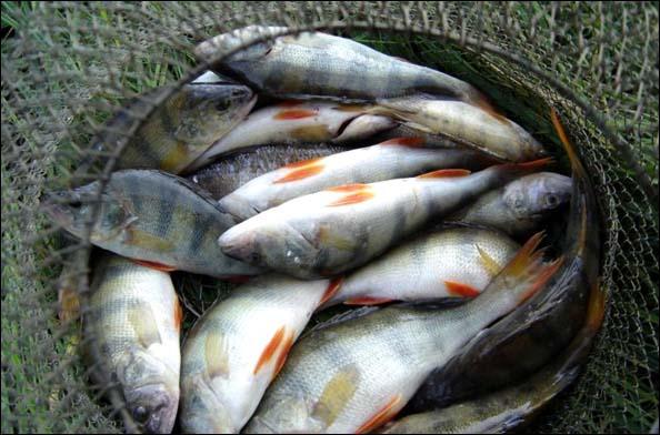 В Смоленском Поозерье пройдет фестиваль «Рыбацкая кухня»