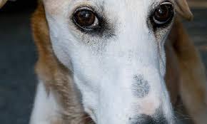 Пиометра у животных: причины, симптомы, лечение