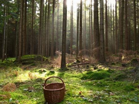 В Смоленской области вторые сутки ищут пропавшего мужчину