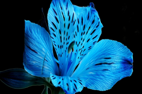 В Смоленске мошенники устроили цветочный «лохотрон»