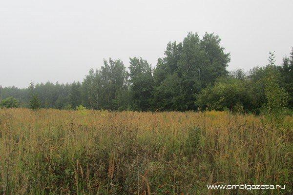В Смоленскую область придёт тепло с дождями и грозами
