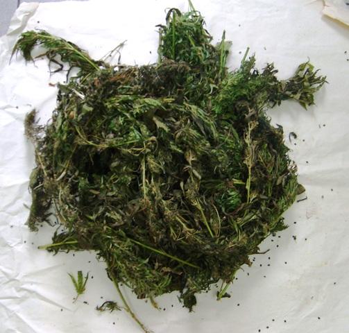 Смоленские полицейские изъяли у безработного мужчины крупную партию марихуаны и гашишного масла