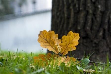 9 сентября в Смоленске до 18 градусов тепла