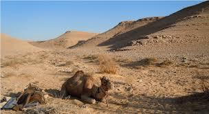 Необыкновенная пустыня Негев