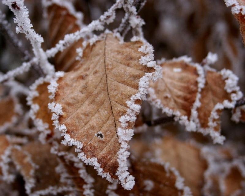 Ночью в Смоленской области похолодает до минус 9 градусов