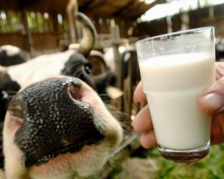 Смоленская область стала лидером в стране по увеличению молочной продуктивности