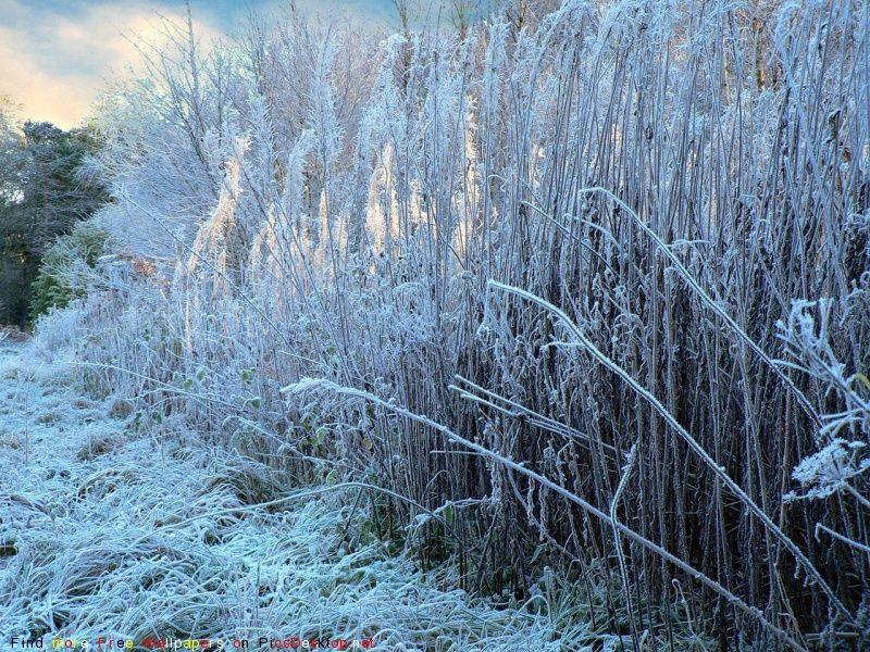В Смоленской области ночью ожидается похолодание до минус 18 градусов