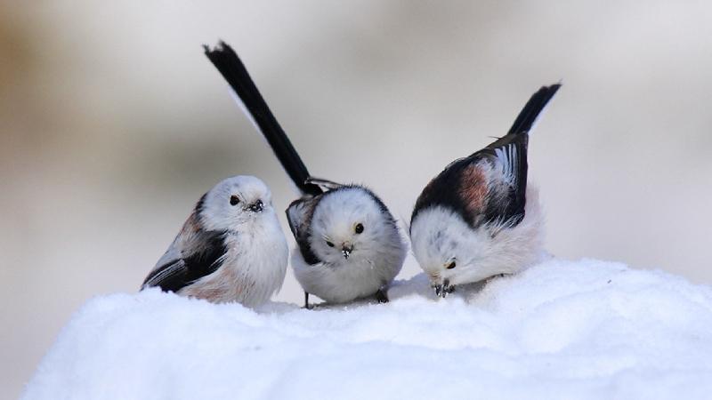 В Смоленске пройдут соревнования по спортивной орнитологии