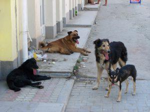 В Смоленске собаки нападают на детей