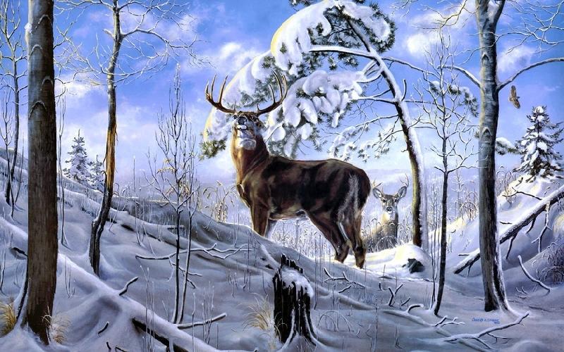 В Смоленской области браконьер застрелил оленя