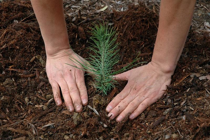 Смоленская область – лидер в ЦФО по агротехническому уходу за лесами