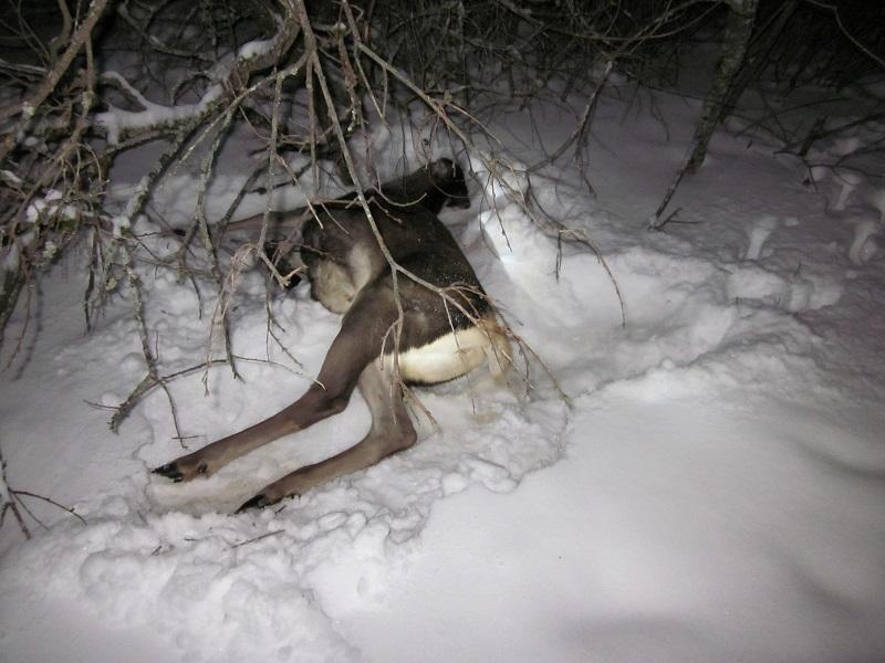 В Смоленской области задержали московских браконьеров