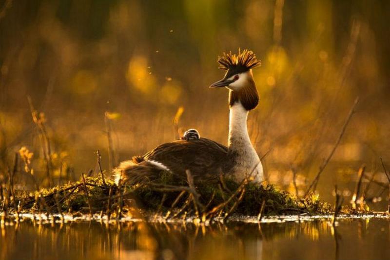 Смоленский фотограф победил в конкурсе журнала National Geographic
