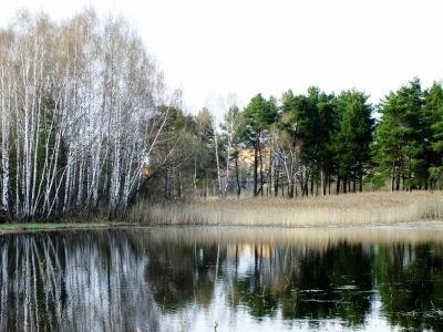 В Смоленске готовятся к обустройству памятника природы «Красный Бор»