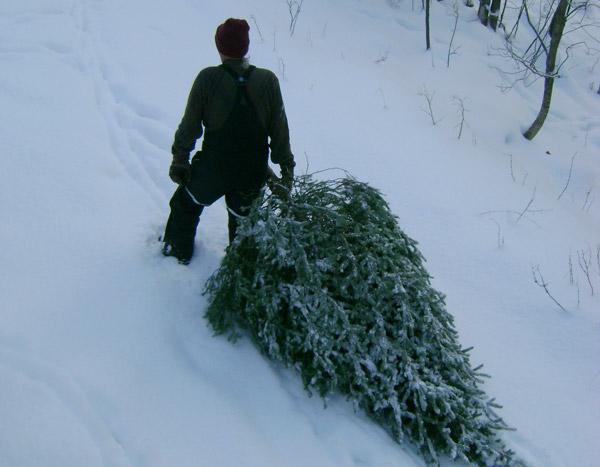 Смолянин заплатил почти миллион рублей за незаконно срубленные деревья