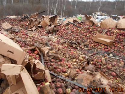 На полигоне в Смоленской области уничтожили более 23 тонн яблок