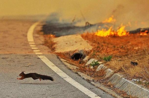 Смоленские огнеборцы за сутки 4 раза выезжали тушить траву