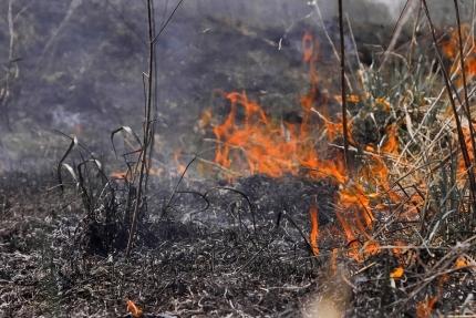 В Смоленской области уже сгорело 23 гектара сухостоя