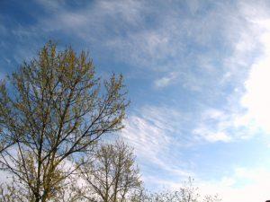 Во вторник в Смоленской области сохранится ветреная погода