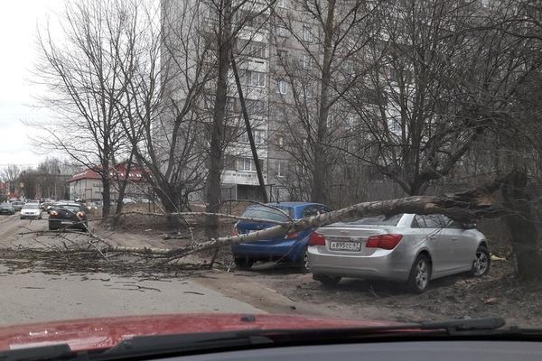 В Смоленске ветер повалил дерево на машину