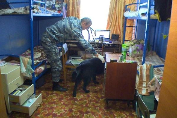 В Смоленске в студенческом общежитии полицейские с собаками искали наркотики