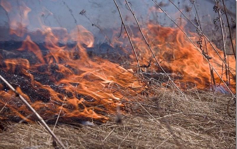 Смоленщина досрочно готовится к пожарному сезону