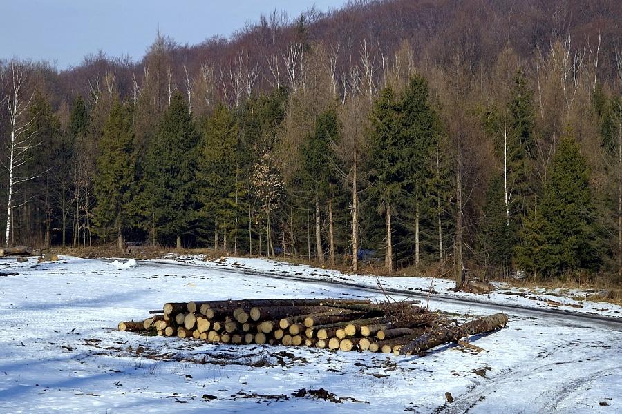 Жители Смоленской области незаконно нарубили берёз на 40 тысяч рублей