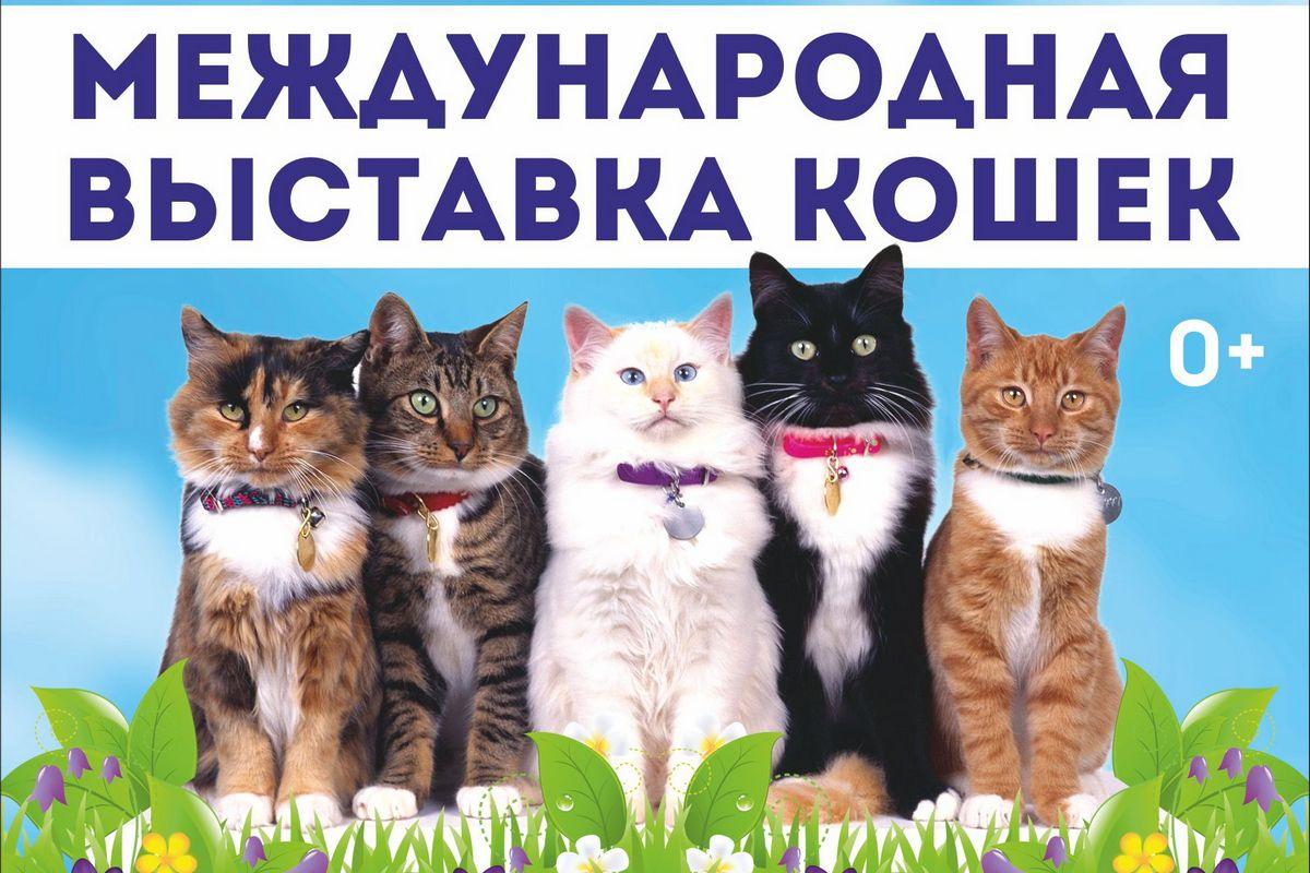 В выходные в Смоленске пройдет Международная выставка кошек