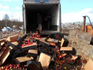 В Смоленской области уничтожили 8 тонн яблок